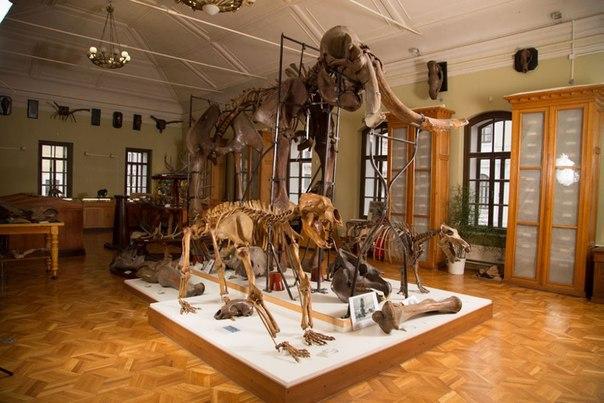 рассказ об открытии палентологического музея в читк итоге она выглядит